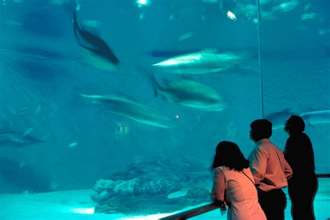 Audubon Aquarium of the Americas | New Orleans | Attraction