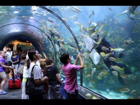 Audubon Aquarium Of The Americas   New Orleans, Louisiana ...
