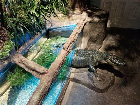 Audubon Aquarium of the Americas – New Orleans, LA – Ocean ...