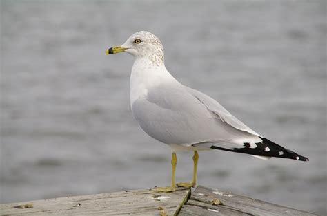 Audubon Coastal Bird SurveyBirmingham Audubon