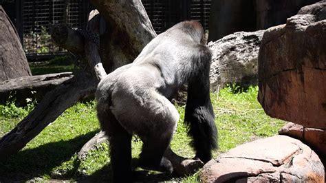 Audubon Zoo and Aquarium in New Orleans   YouTube