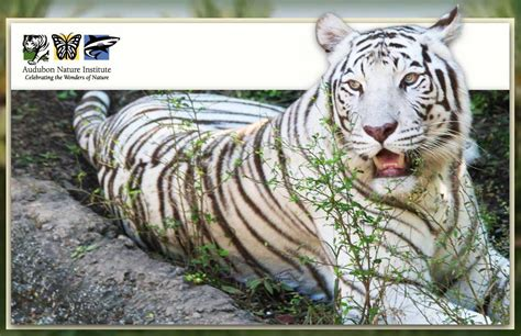 Audubon Zoo | Experience New Orleans!