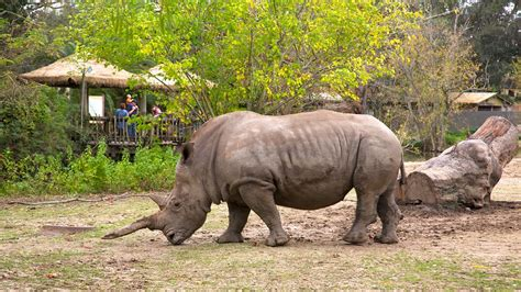 Audubon Zoo in New Orleans, Louisiana | Expedia