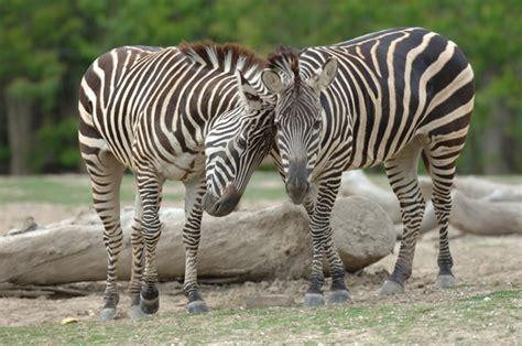 Audubon Zoo | New Orleans | Attraction