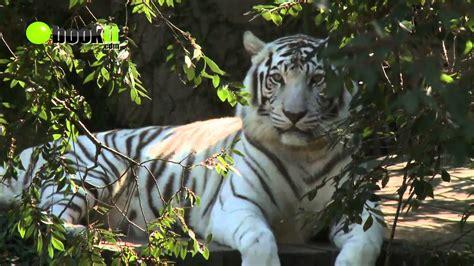 Audubon Zoo Tour   New Orleans, Louisiana   YouTube