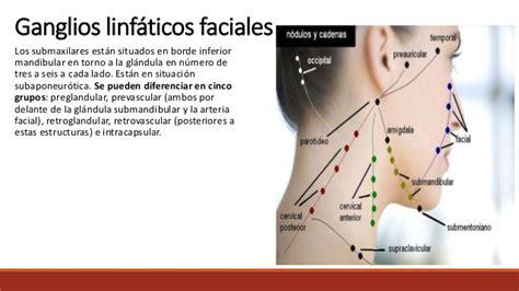 Aula IV  linfáticos del cuello
