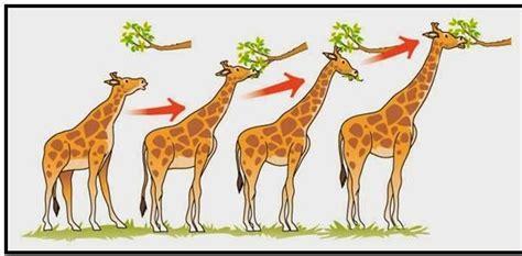 aulabiogeotoni: 4º ESO. TEMA 9. EVOLUCIÓN BIOLÓGICA ...