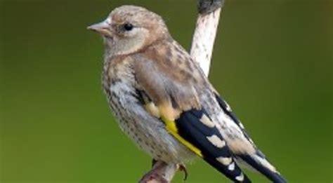Aumenta la población de aves comunes | El Imparcial