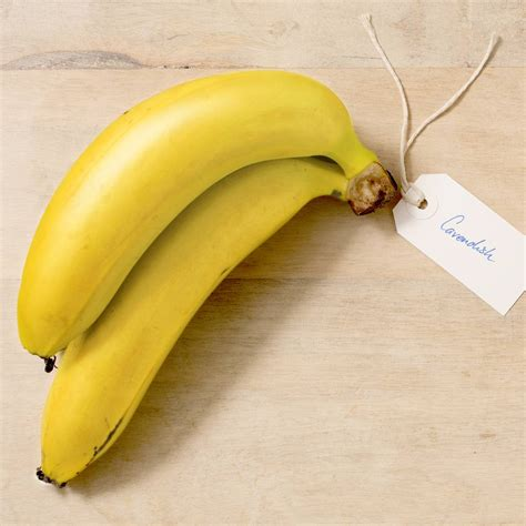 Australian Bananas   All About Bananas   Banana Varieties