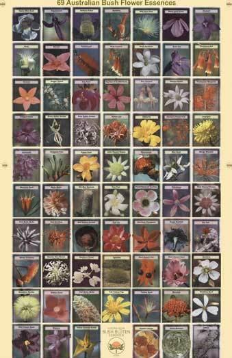 Australian Bush Flower Essences Poster Bushflowers picutres