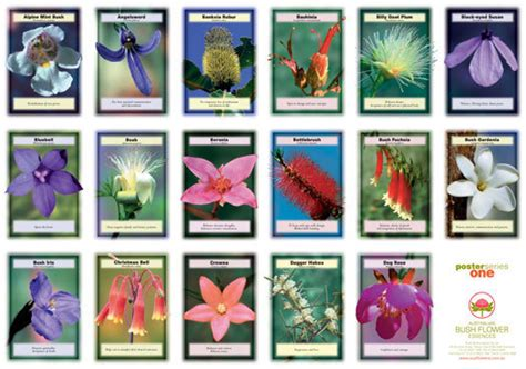 Australian Bush Flower Essences Wall Charts, Set of 4 ...