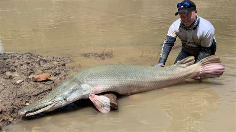 Australian guy catches Huge Monster Alligator Gar   YouTube