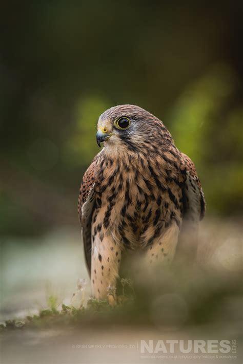 Autumn Birds of Prey Photography Workshop | 2019 | NaturesLens