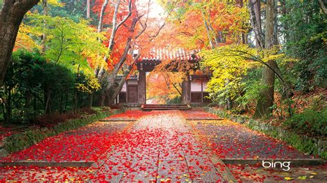 Autumn in Japan Wallpapers | HD Wallpapers
