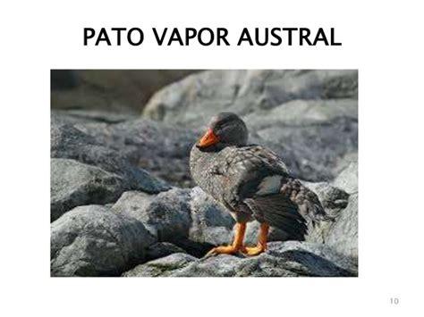 Aves 1: AVES QUE NO VUELAN
