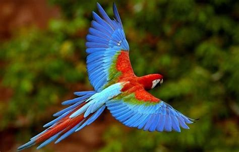 Aves  animales vertebrados    Escuelapedia   Recursos ...