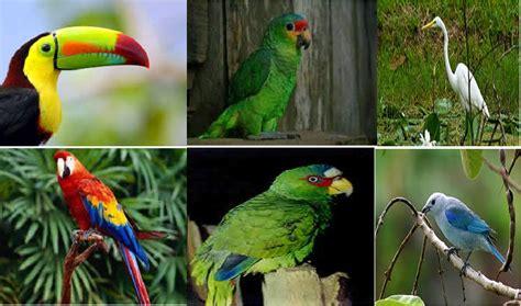 AVES: Aves en Honduras