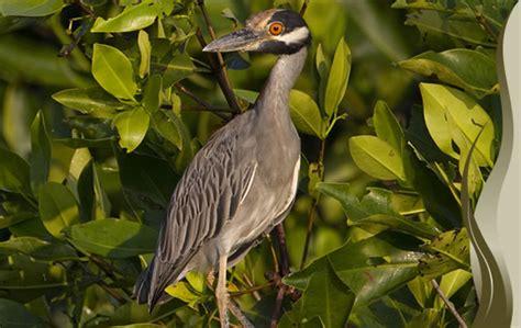 Aves | Biodiversidad Mexicana