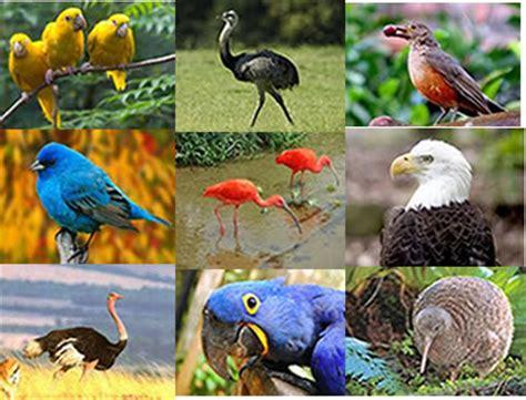 Aves. Características gerais das aves   Alunos Online