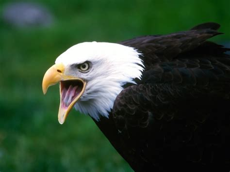 Aves cazadoras | animalzkingdom