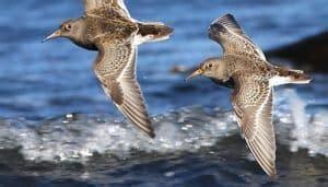 Aves Costeras   Características, Hábitat, Alimentación Y ...
