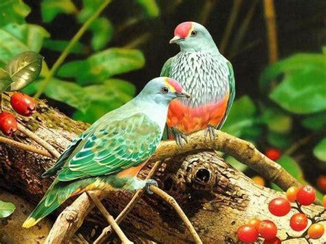 Aves de Colombia   En esta foto vemos unos exóticos ...
