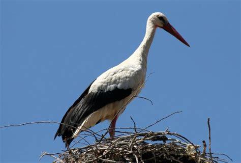 Aves de España   AnimalesHoy