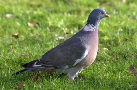 Aves de España | AnimalesHoy