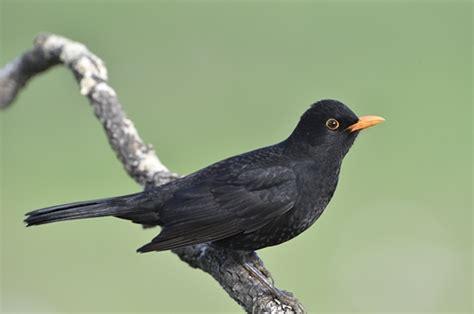 Aves de Extremadura Extremadura espana.es