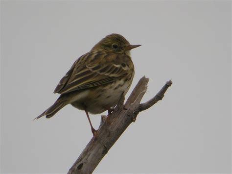 Aves de Marbella: Pájaros de invierno