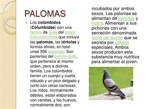 Aves De Orizaba2