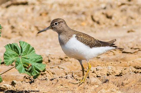 AVES DEL CIELO   BIRDS OF HEAVEN: BIRDS OF SPAIN AVES ESPAÑA
