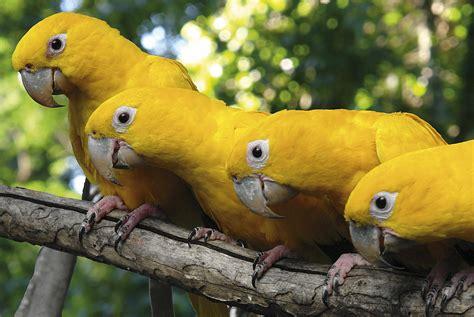 Aves do Brasil  Animais que colorem o nosso céu ...