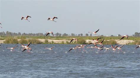 Aves en el parque nacional de Doñana   YouTube