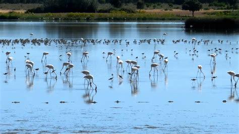 Aves en las marismas de El Rocío, Doñana..MOV   YouTube
