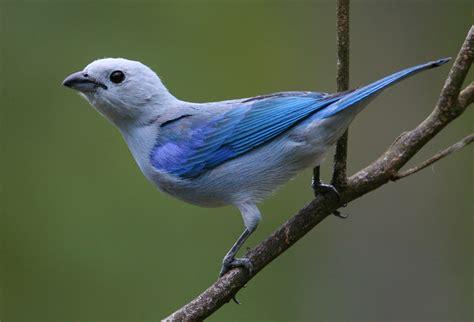 Aves en Panamá: Las aves modifican su canto para adaptarse ...