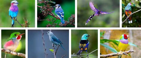 Aves Exoticas 2018   Las Mas BELLAS BARCELONA