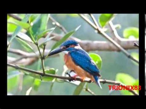 aves exoticas del mundo en imagenes algunos de los pajaros ...