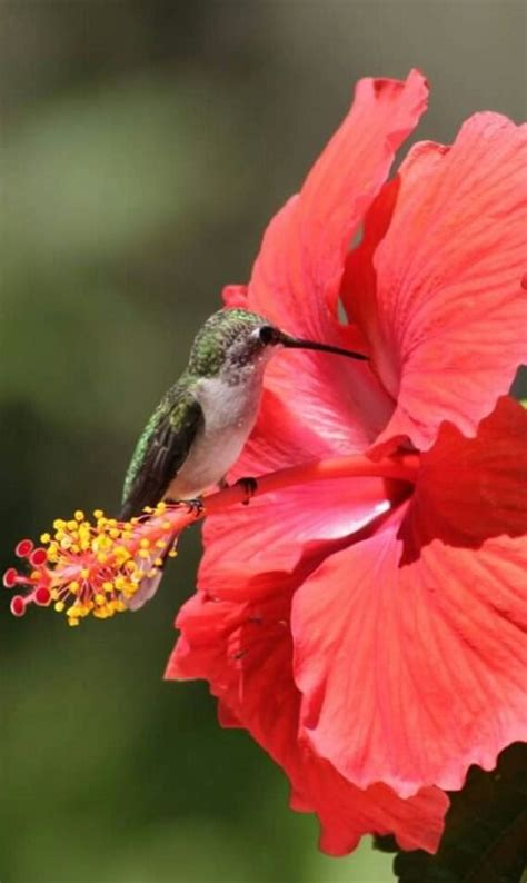 Aves exóticas del mundo por Inés Beatriz en 2020 | Aves ...