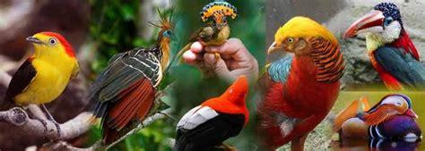 AVES EXÓTICAS  Lista de las mas hermosas del mundo, fotos