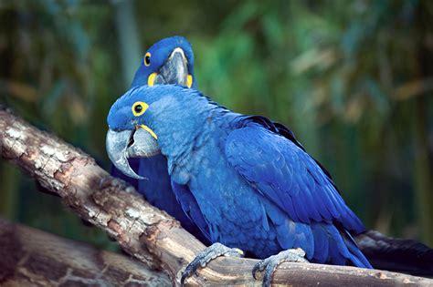 Aves exóticas | Pajarería Amazonas