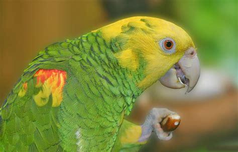 Aves exóticas que habitan en el río Amazonas