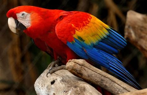 Aves exóticas   Un nuevo mundo por descubrir