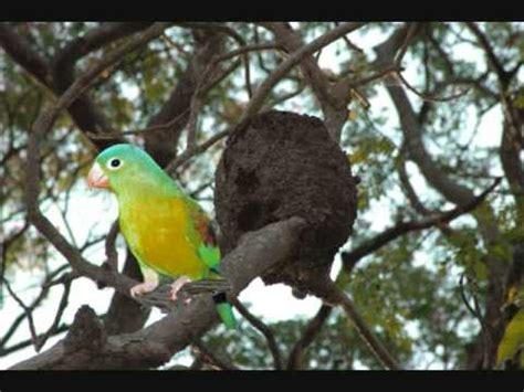 Aves Exóticas Zoológico de Nicaragua manfut   YouTube