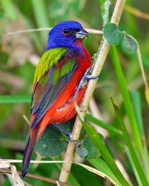 Aves extraordinarias de México