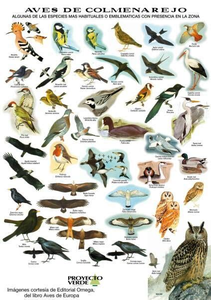 Aves   Google Search | Aves, Dibujos