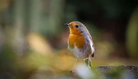 Aves Insectívoras. Características, Clasificación, Popular
