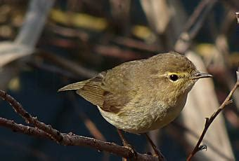 Aves insectívoras como alternativa a los plaguicidas ...