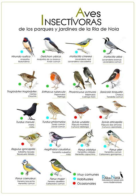 Aves insectívoras de los parques y jardines de la Ría de ...