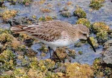 aves marinas canarias  CANARIAS CONSERVACIÓN   Cetacean ...